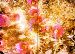 Désert de Cactus, Arizona, USA
