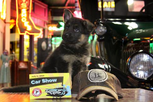 German Shepherd Puppy Car Show Frontier Auto Museum