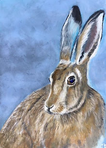 JB Brown hare blue eyes