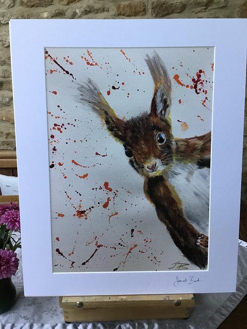 JBOPr Red Squirrel