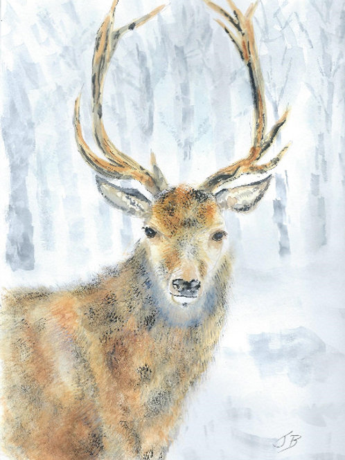 JBOA Stag in snow