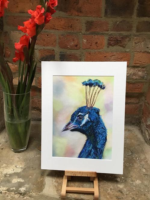 JBOPr Proud Peacock