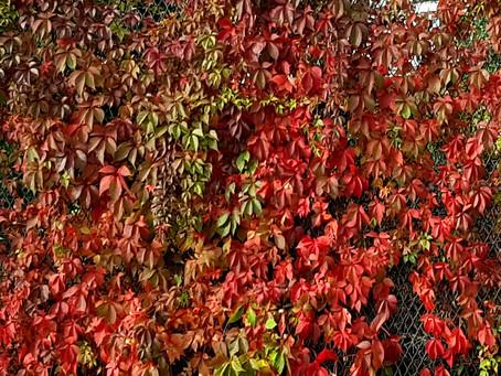 Autumn - reflections