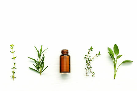 Herbs for Essential Oil
