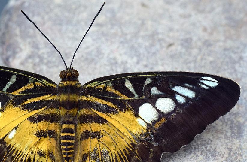 butterfly-3226534_1920.jpg