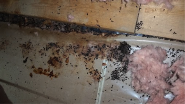 mouse-droppings-355x200.png