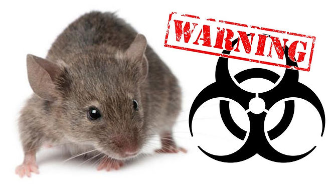 Fusion Decon Rodent Dropping Cleanup Services