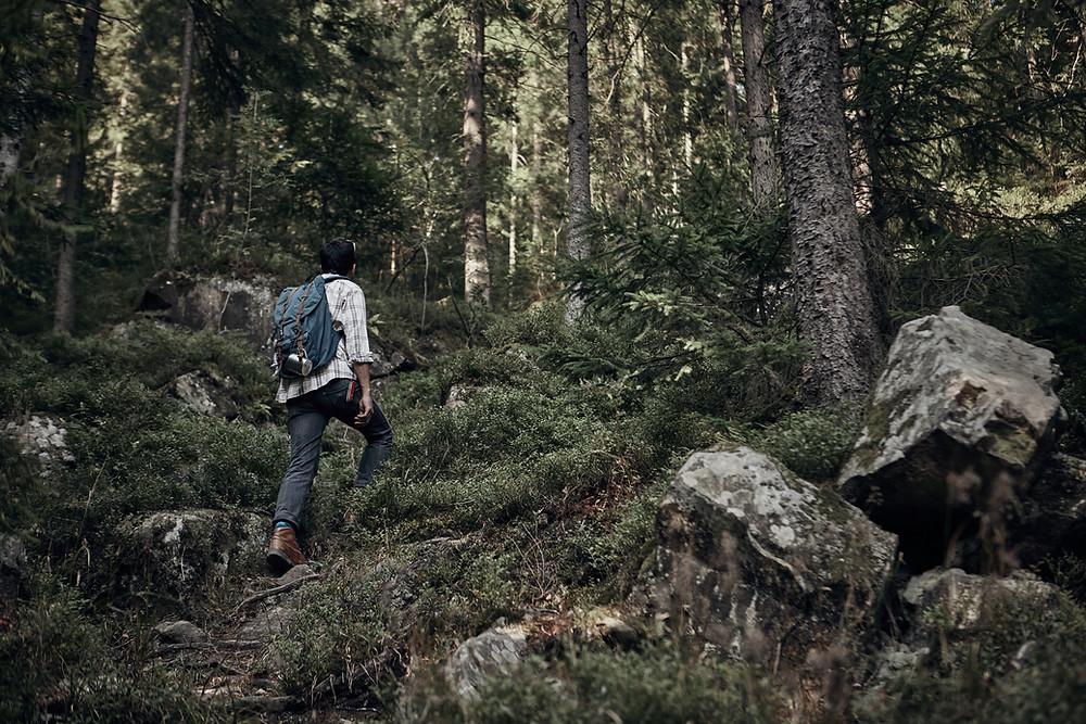 A hiker in a wild forest, origin of wilsome