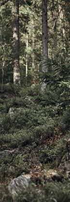man-hiking-in-wilderness