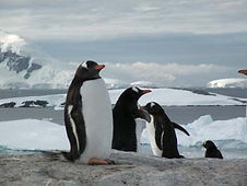 Antarctique_2013.jpg
