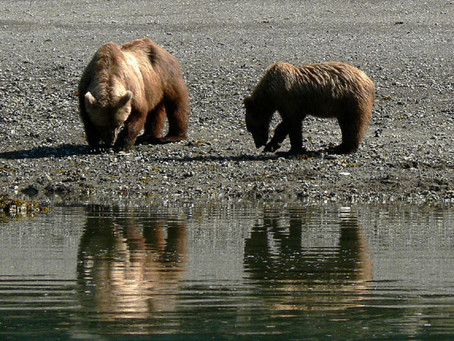 July 27th, 2013 - Kodiak (Alaska)