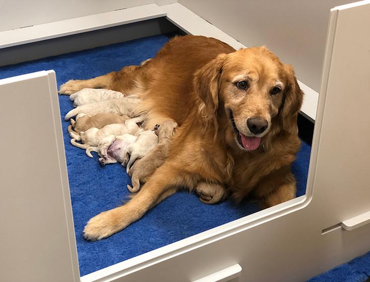 Pearl nursing her babies