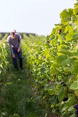 Vazart Coquart Champage Producer Page | Dawe Wines