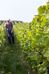 Grongnet Champagne Producer Page | Dawe Wines