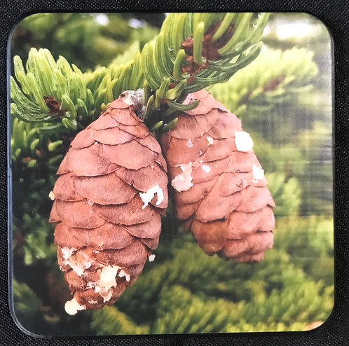 "4""x4"" Coasters - Set of 4 Color, Twin Cones"