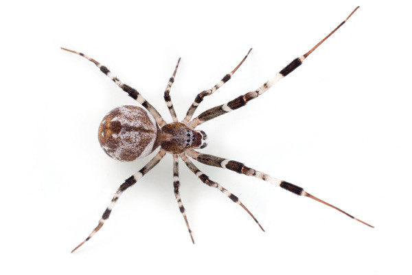 Spider Pic from Google images