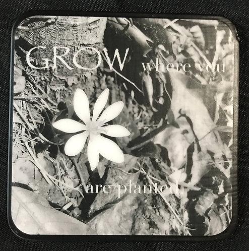 """4""""x4"""" Coasters - Set of 4 b/w, Grow"""