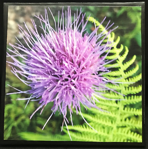"Print on Canvas -Thistle Finished size 8""x8"""