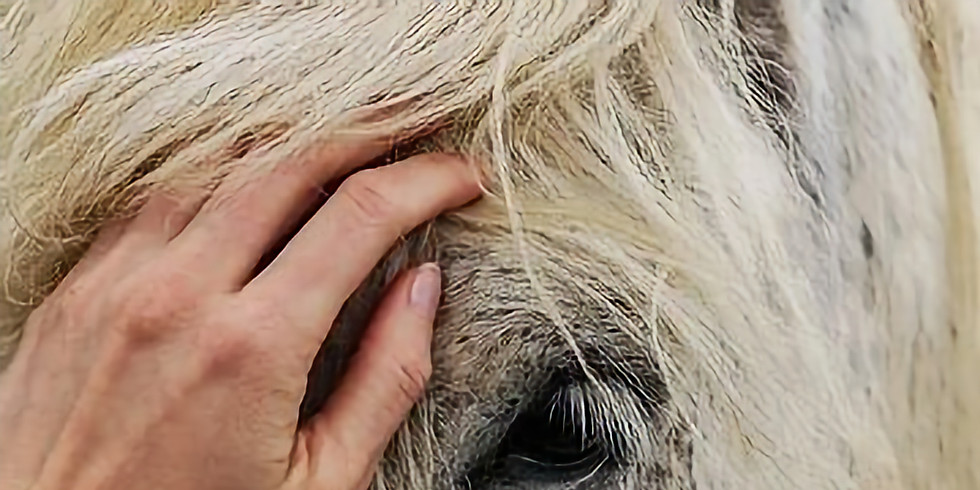 Workshop: Horses and Cranio (For CS Therapists)