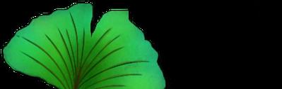 Ginko coeur admantin dupliquer VERT3.png