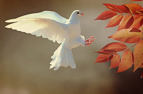 Dove-2.jpg