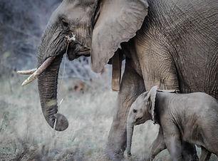 Dorosłych i Baby Elephant