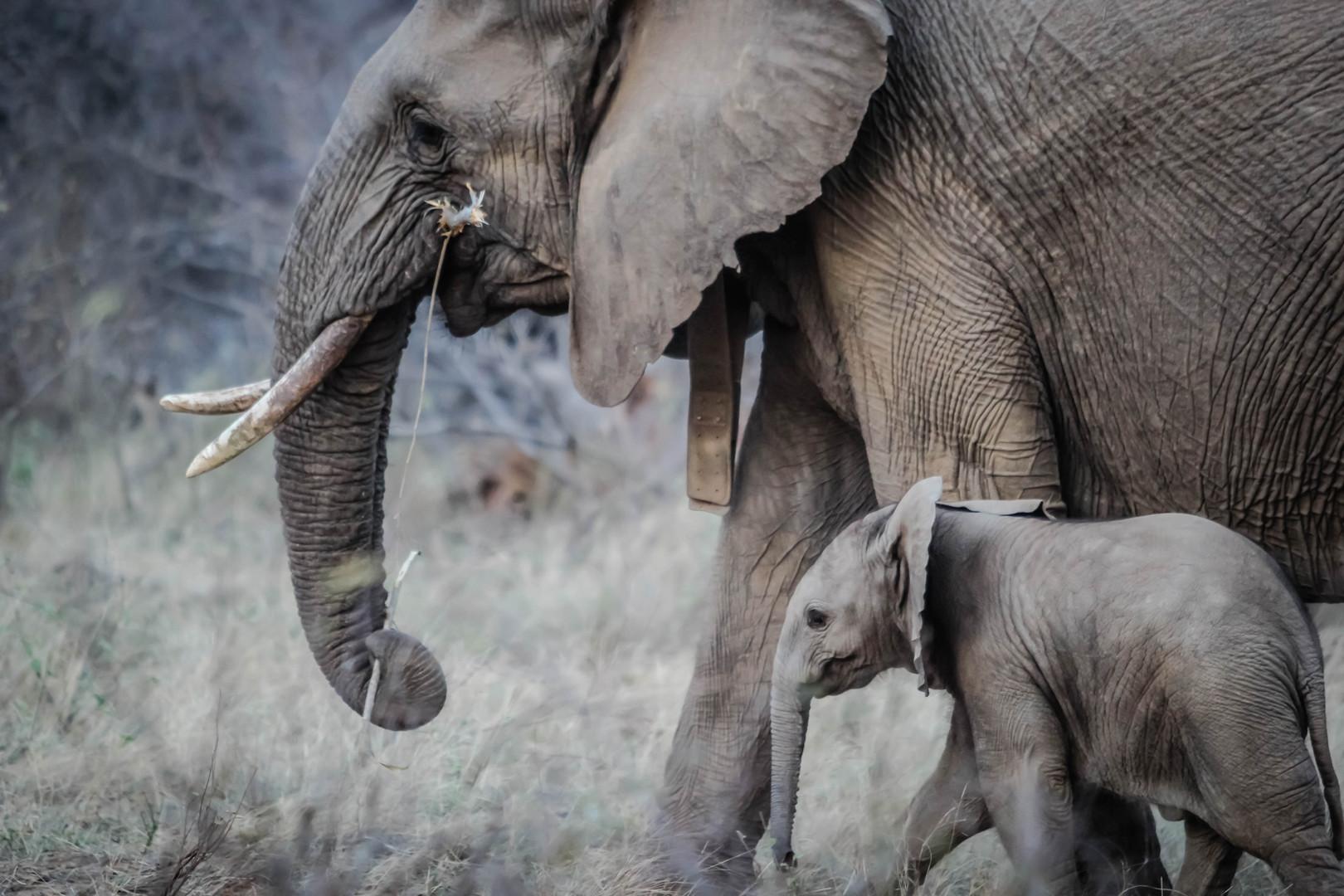 Adultes et bébé éléphant