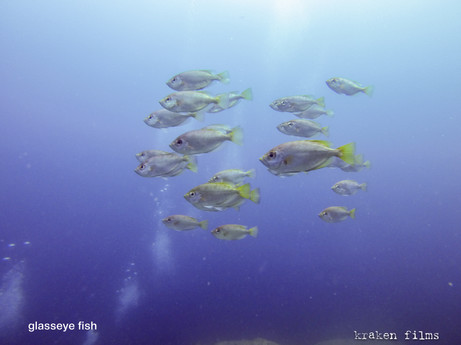 fish id glass eye.jpg