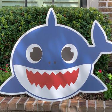 BABY BLUE SHARK