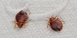 Rid Your Home Of Unwanted Pests