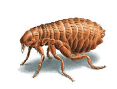 pest termite control inspection infestation wood repair treatment service fumigation green free birds bed bugs