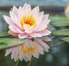 Crown Chakra opens like a Lotus