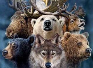 Spirit Animal Guides