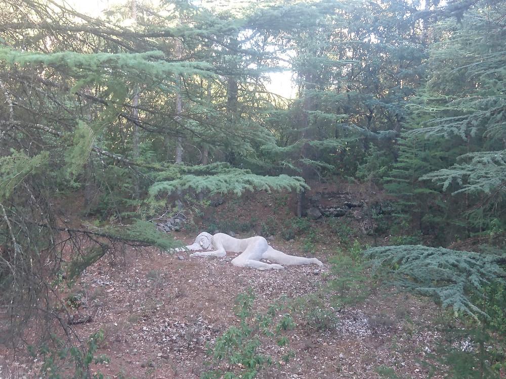 """""""La belle endormie"""" parc des cèdres"""