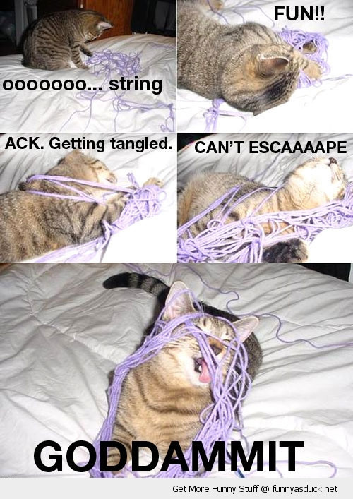 cat caught in yarn.jpg