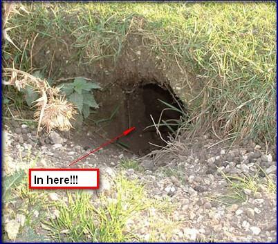 crawl in a hole.jpg