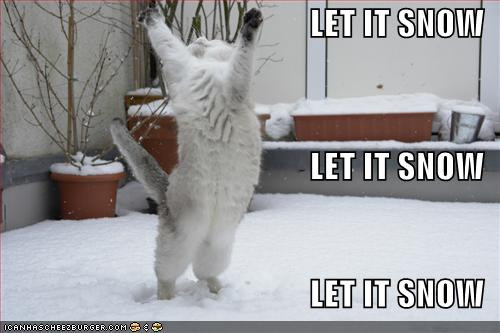 funny-pictures-cat-is-excited-about-snow.jpg