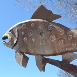 Trout at Ashley Pond Park