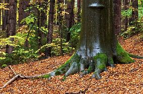 arbre .jpg