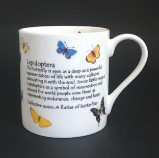 Lepidoptera aka Butterfly