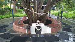 Audumbar Vruksha
