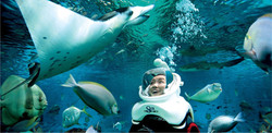 Adventure-Cove-Waterpark-Sea-Trek-Advent