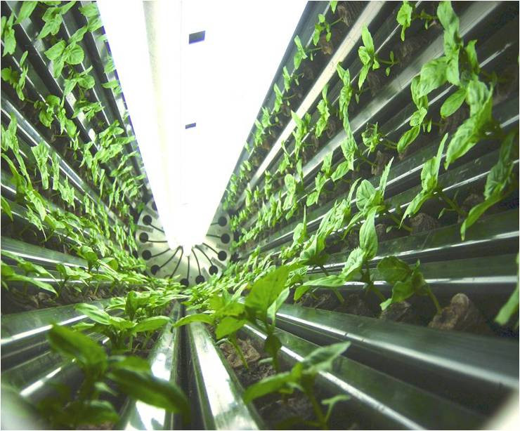 Fuente: http://theagrinews.blogspot.com/2012/12/the-future-of-agriculture-may-be-up.html#.WFRGFrbhCEI