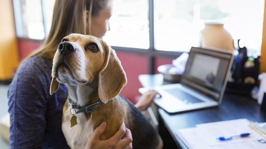 Fuente: http://www.cnbc.com/2015/10/15/more-firms-allowing-dogs-and-other-pets-in-the-office.html