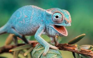 Fuente: http://wallpapercave.com/chameleon-wallpaper
