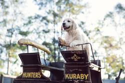 Gold Coast Pet Photographer