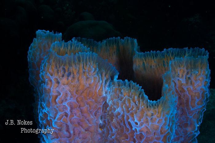 Scuba diving soft sponge in Bonaire
