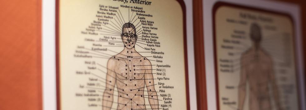 Ayurveda Medizin
