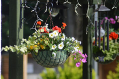 Our Beautiful Hanging Baskets