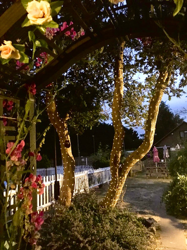 Our Garden at Night